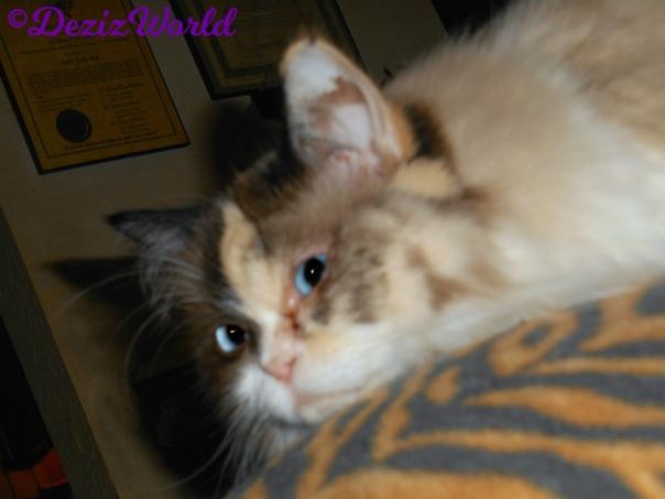 Raena lays on back of chair -selfie-