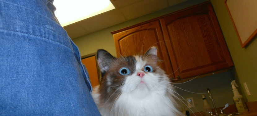 Chatting Cats: The Eyes HaveIt