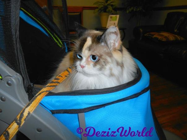 Raena sits in stroller at vet