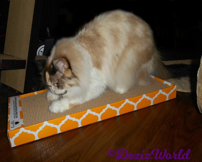 Raena scratches ourpets cat scratcher