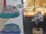 Chatting Cats: A Meowsy FelineFriday