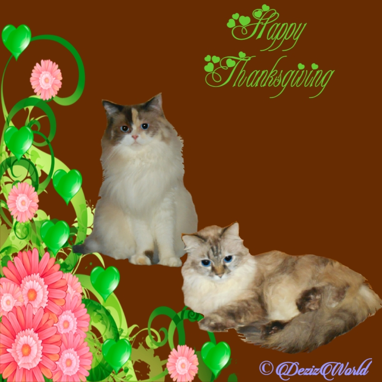 Dezi and Raena in a happy thanksgiving frame