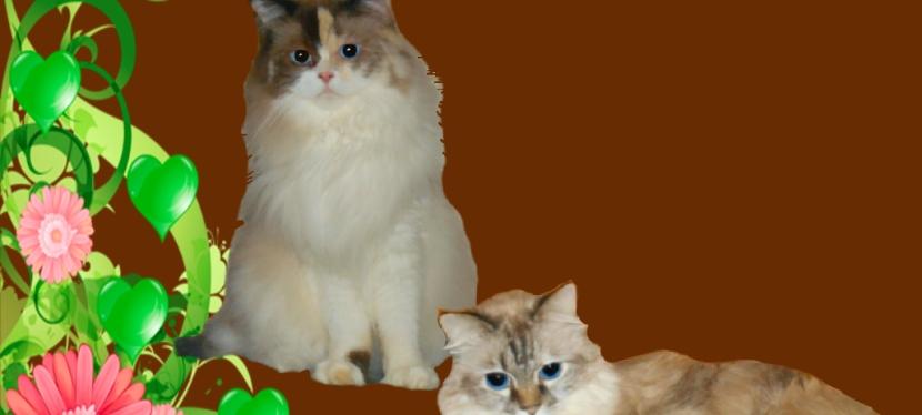 Chatting Cats: Happy Thanksgiving SlowBlinks