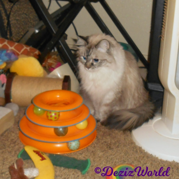 Dezi sits in front of track toy