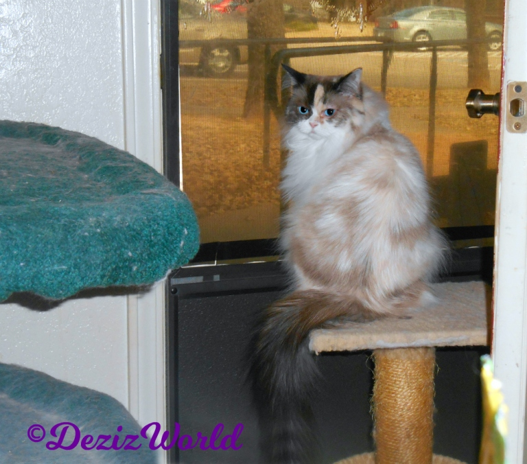 Raena post surgery sits on small perch in front of door looking back