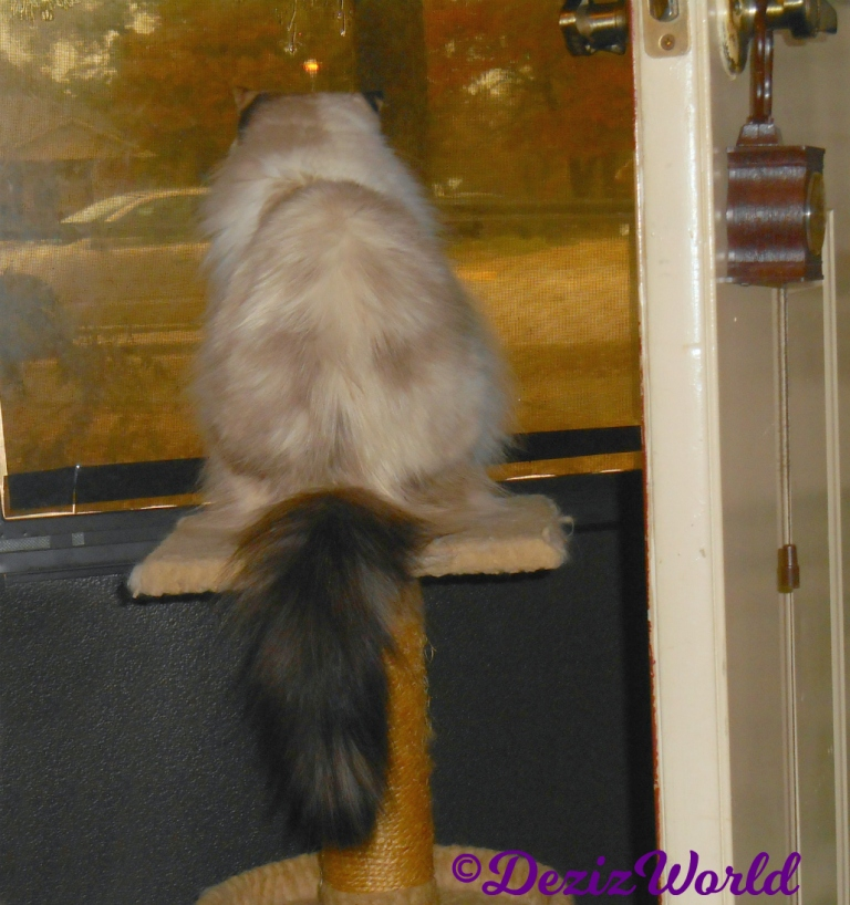 Raena looks out door from small perch