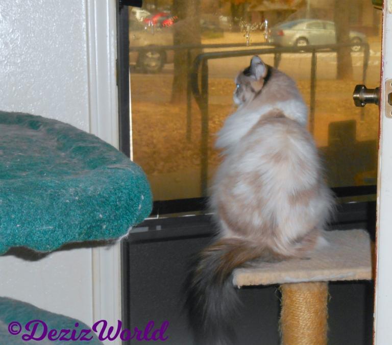 Raena sits on small perch at door
