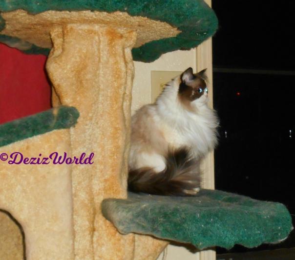 Profile of Raena sitting on the cat tree