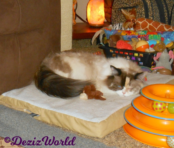 Raena sleeps on the heated cat mat