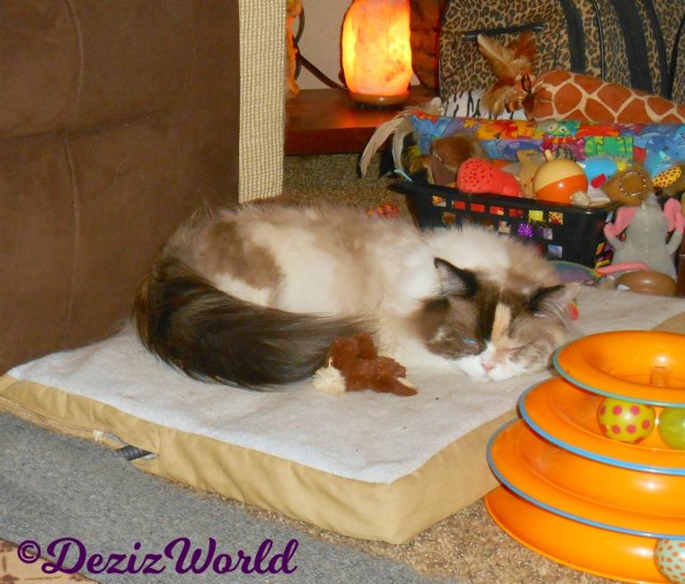 Raena sleeps on the heated cat mat
