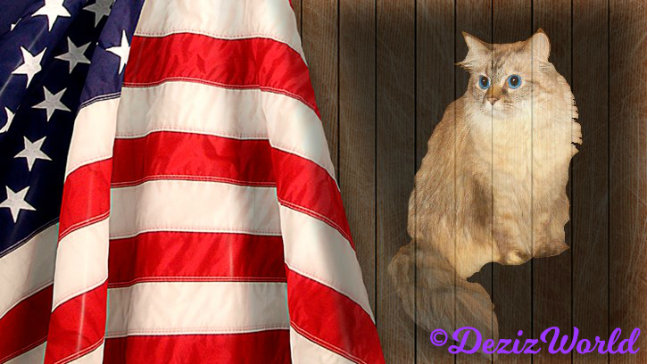 Dezi sits looking at flag on wood background frame
