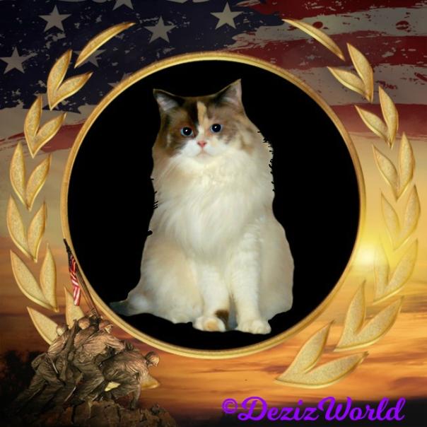 Raena sits pretty in a patriotic memory frame