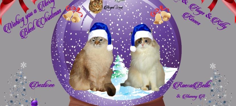 Chatting Cats: DearSanta