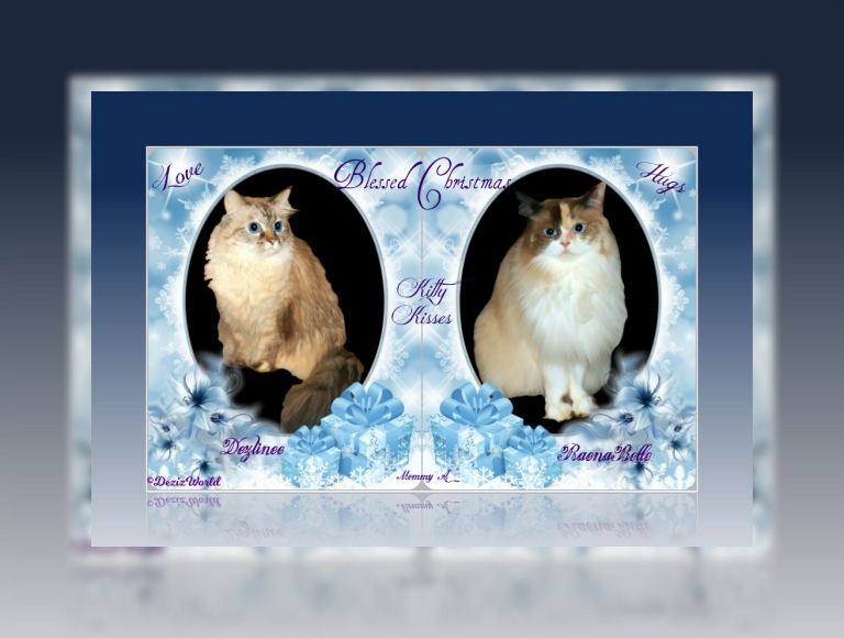 Dezi and Raena in a blue Christmas frame