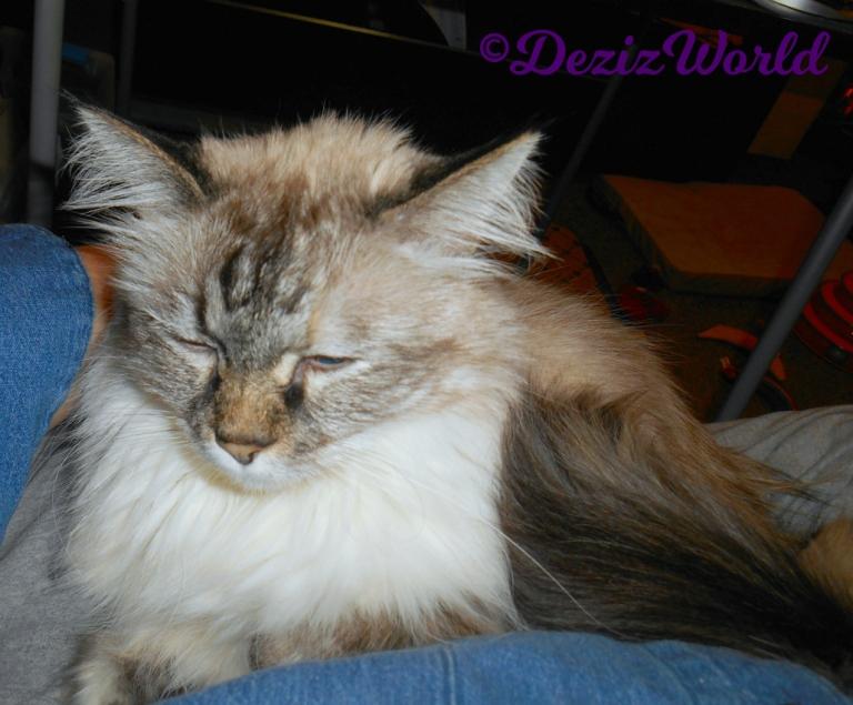 Dezi sleeps in mommy A's lap