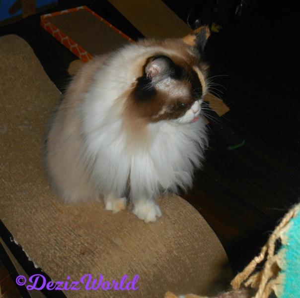 Raena sits on cat scratcher