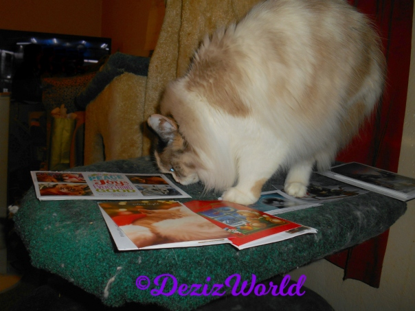 Raena sniffs Christmas cards while standing in the middle of them