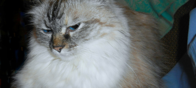 Chatting Cats: Cat Themed Gift Guide On ABudget
