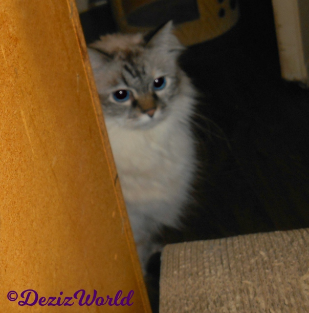 Dezi peeks around the corner