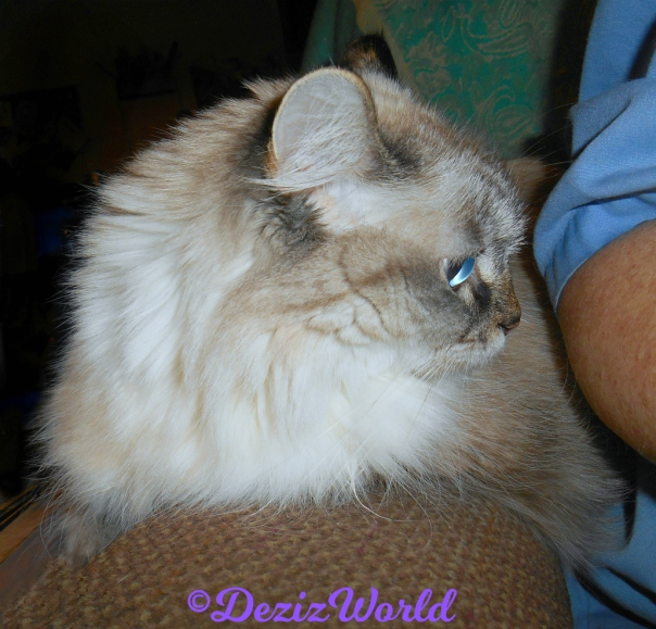 Dezi lays on chair arm looking at mommy A