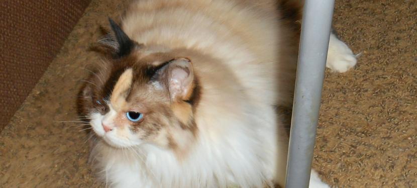 Chatting Cats: Nip Nugs AndVine