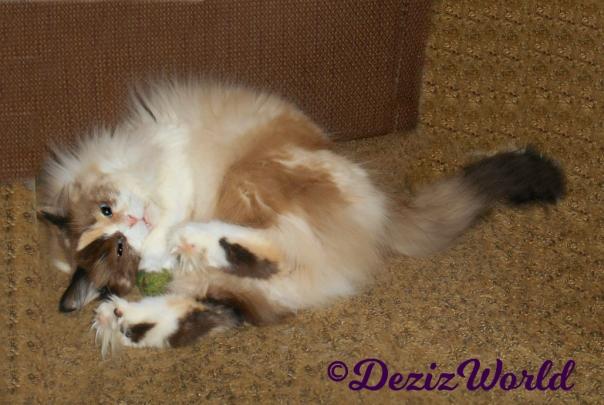 Raena plays with Kitty Nug