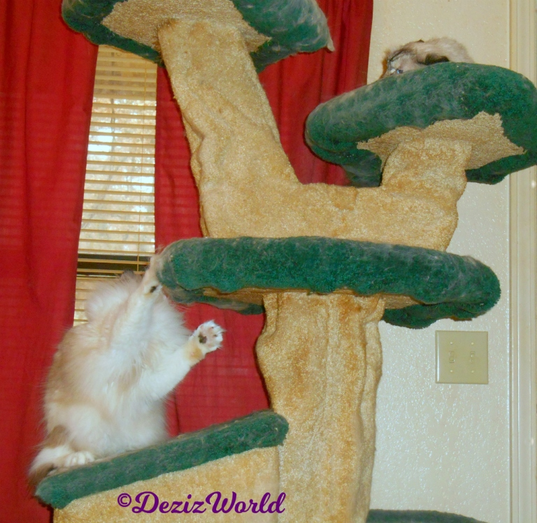 Dezi and Raena play on cat tree