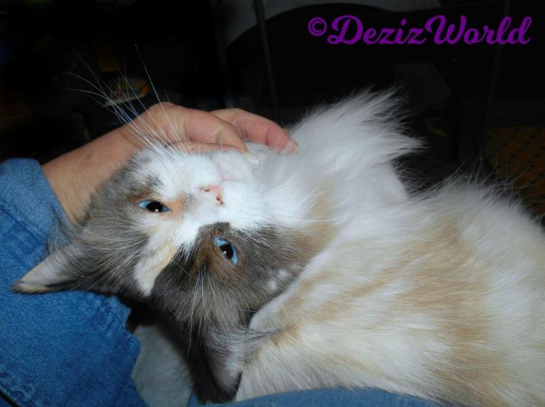 Raena gets lap loving