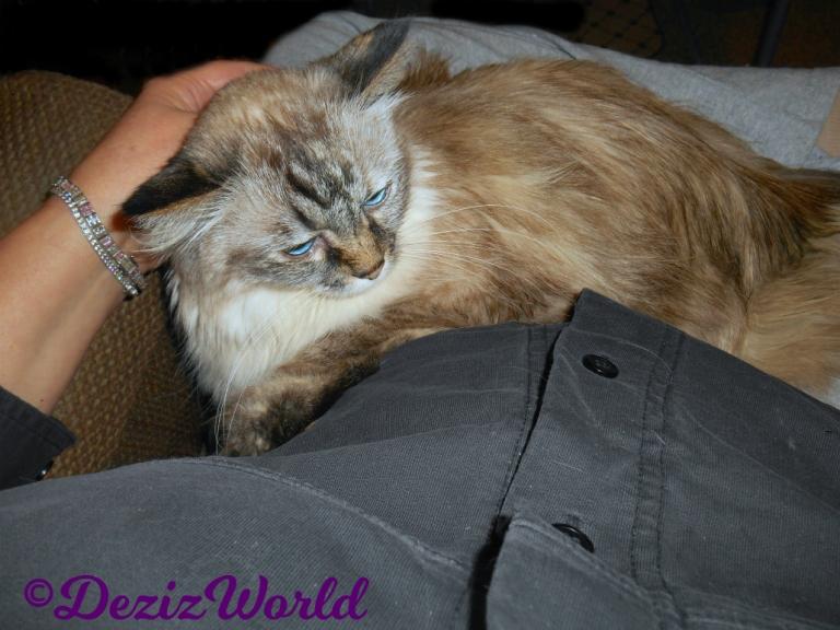 Dezi gets lap loving in mommy A's lap