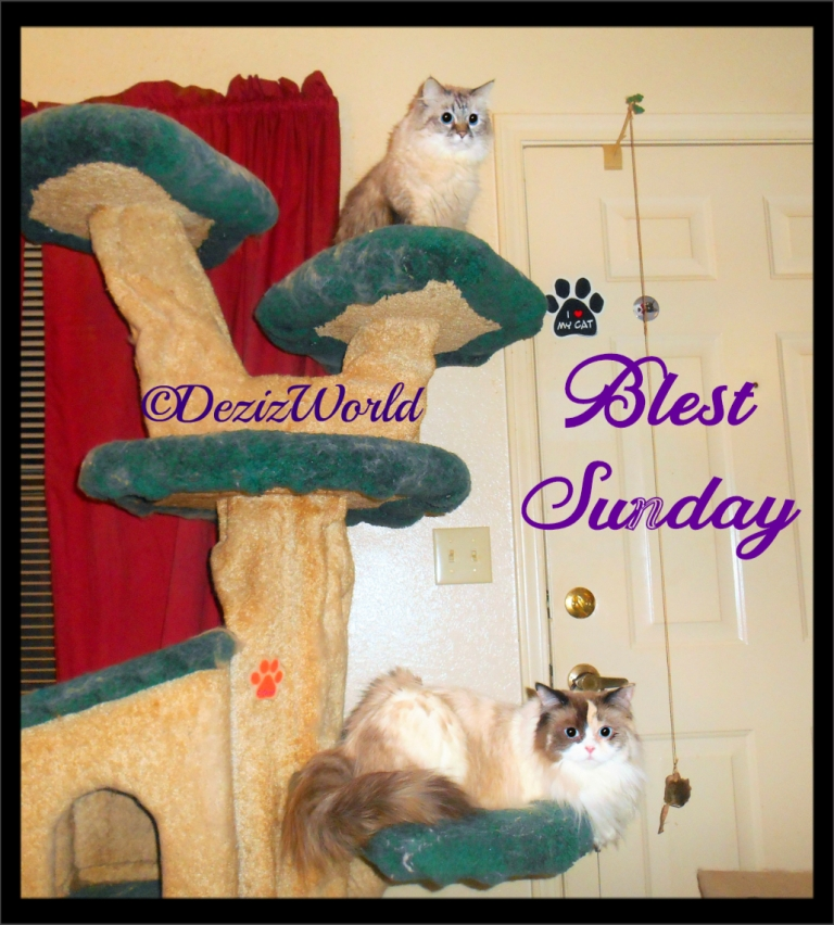 Dezi and Raena lay on cat tree with Blest Sunday banner