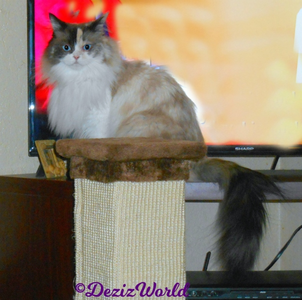 Raena sits in front of tv