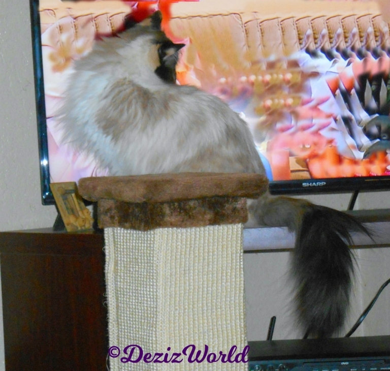 Raena sits in front of the tv and watches it