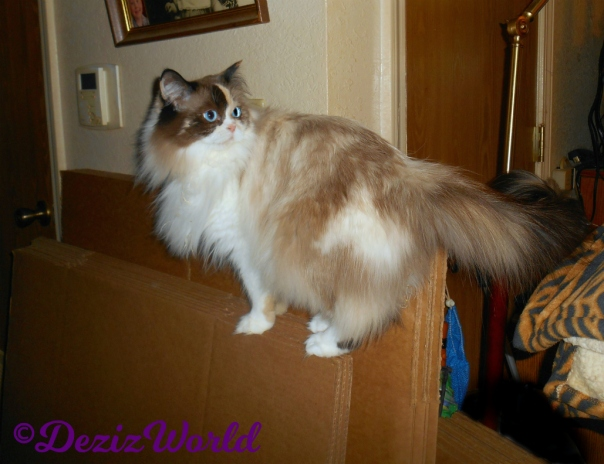 Raena stands on boxes in hallway looking back
