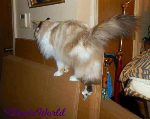 Raena walks on boxes in hallway