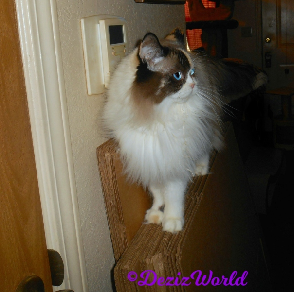Raena stands on boxes in hallway - selfie