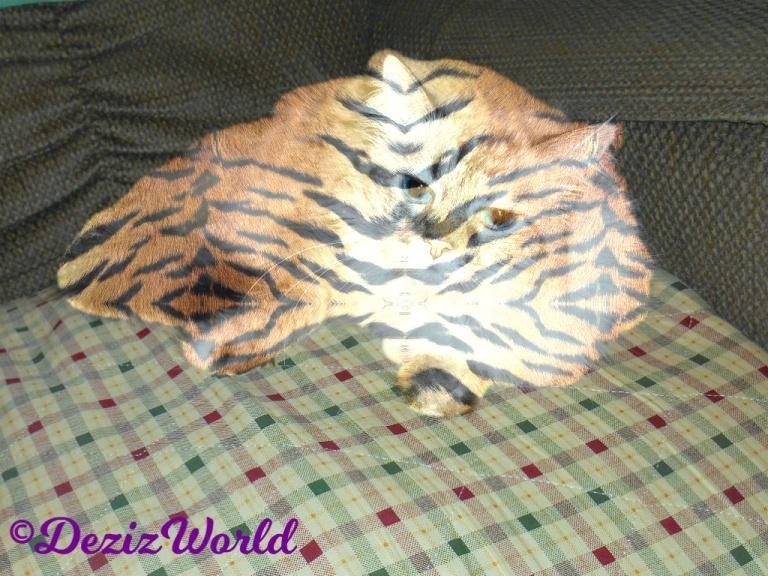 Dezi selfie as a tiger