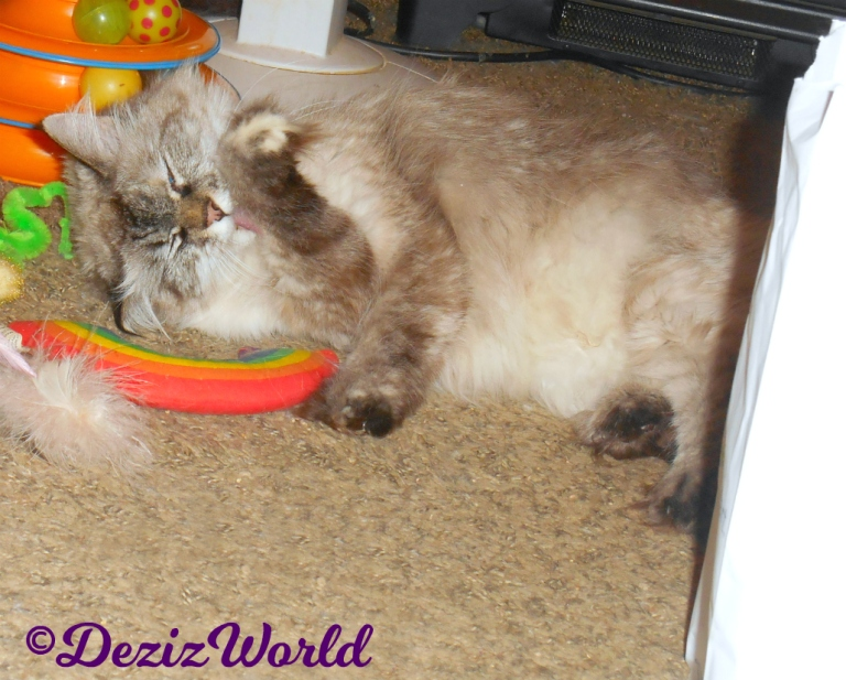 Dezi bathes laying on nip toys