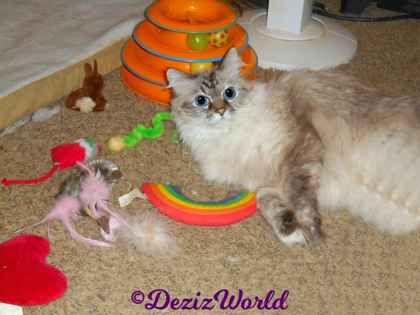 Dezi lays on floor with nip toys