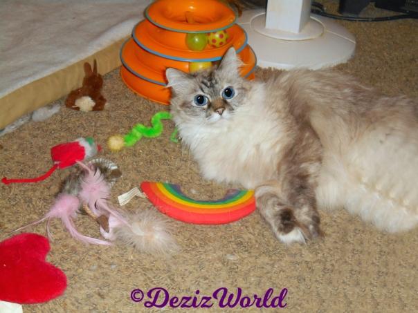 Dezi lays on floor with nip toys