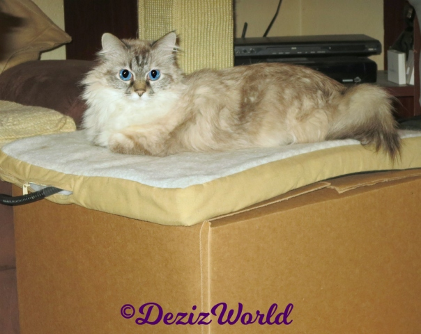 Dezi lays on mat on box