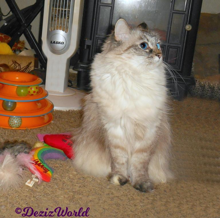 Dezi sits pretty profile