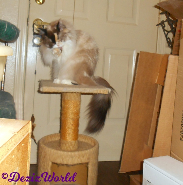 Raena bathes while sitting on small perch