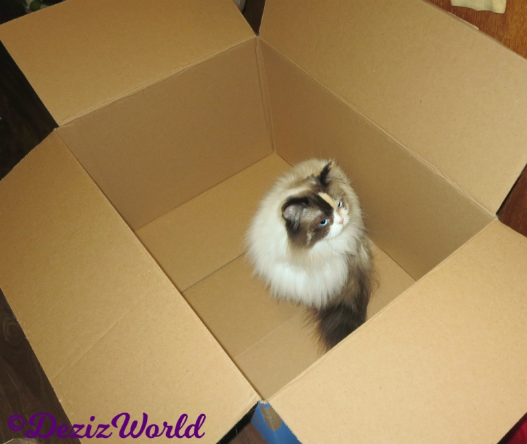 Raena sits in box looking up
