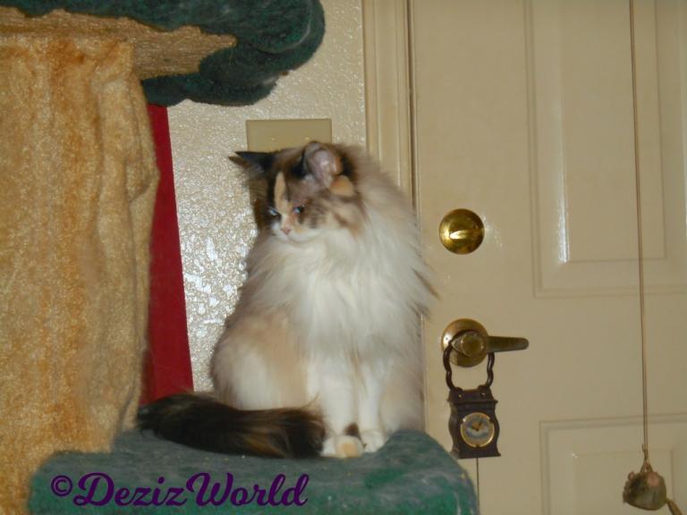 Raena sits pretty on cat tree profile