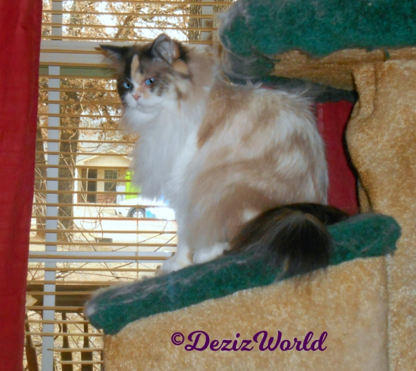 Raena sits on cat tree house in front of window