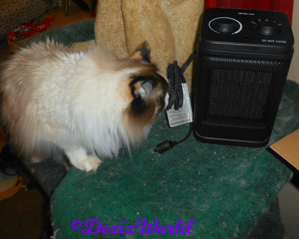 Raena checks out the new space heater from Cindy