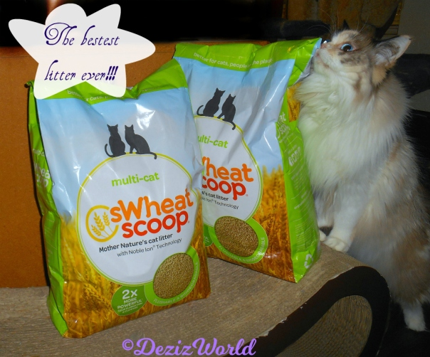 Raena sniffs bag of sWheatScoop cat litter
