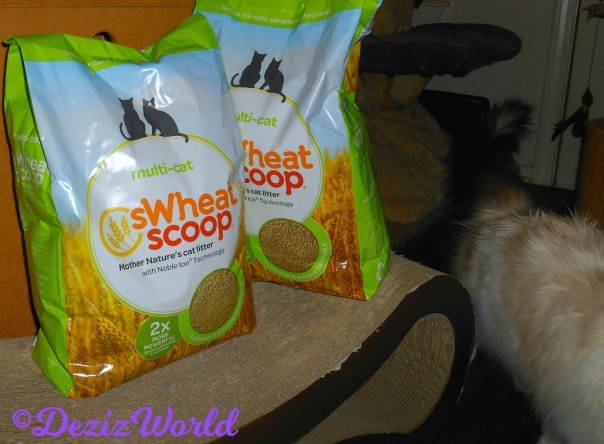 Raena walks by sWheatScoop cat litter