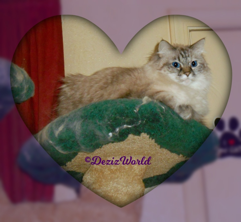 Dezi lays atop the cat tree in a heart frame, selfie