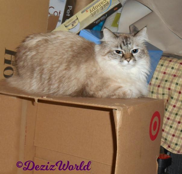 Dezi lays on box